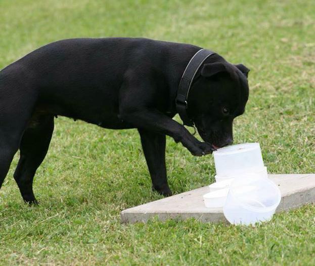 Beteende- och personlighets- beskrivning hund